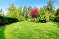 Trawnik podczas upałów - podlewanie i koszenie
