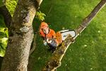 Cięcie drzew ozdobnych - zasady, terminy, narzędzia
