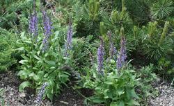 Najcenniejsze zioła do ogrodu. Zioła i ich właściwości lecznicze