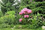 10 sposobów na piękny ogród! To proste!