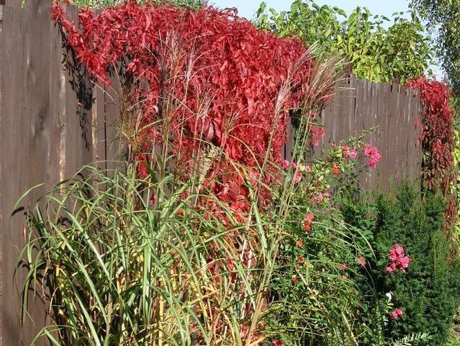 Szybko rosnące rośliny do ogrodu. Co zrobić, żeby szybko uzyskać bujny ogród
