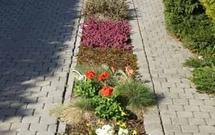 Podjazd i rośliny. Krzewy, pnącza i byliny najlepsze na przesłonięcie gruntu